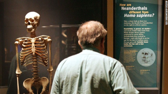 A man looks at an exhibit comparing modern humans to Neanderthals