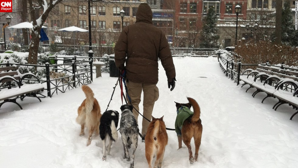 "Friday's snowstorm wasn't going to slow down New Yorkers, whether on two legs or four, said <a href=""http://ireport.cnn.com/docs/DOC-1072088"">Marjorie Zien</a>. While commuting to work, she photographed this man walking five dogs in Union Square Park on January 3."