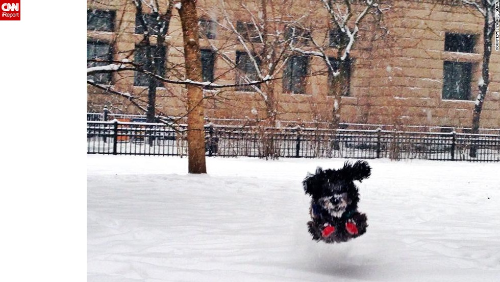 "Three-year-old mixed breed Boris couldn't wait to go outside and romp around. Boris spent Friday morning chasing squirrels in a Chicago park, said his owner,<a href=""http://ireport.cnn.com/docs/DOC-1072273""> Liza Heiligman</a>."