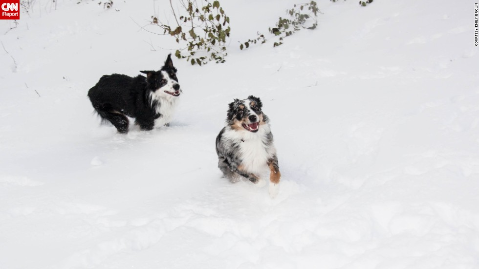"<a href=""http://ireport.cnn.com/docs/DOC-1072500"">Emily Brown</a> has two incredibly active Australian shepherds. The two brothers were partaking in ""snow madness"" as she likes to call it. ""They will jump up and down, bury themselves in the snow, and chase each other through the yard,"" the Indianapolis resident said."
