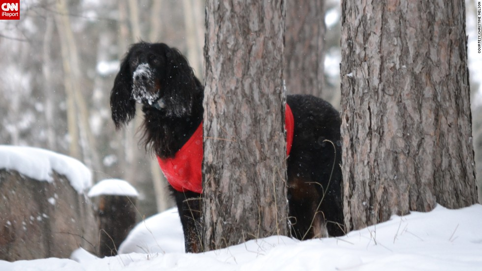 "Even though her 10-year-old gordon setter Pete is getting older, <a href=""http://ireport.cnn.com/docs/DOC-1072677"">Christine Nelson</a> says he enjoys everything about the snow. The Wisconsin resident photographed Pete trotting through the snow in their backyard after more than 20 inches accumulated in some parts of their area."