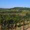 African wine vineyards