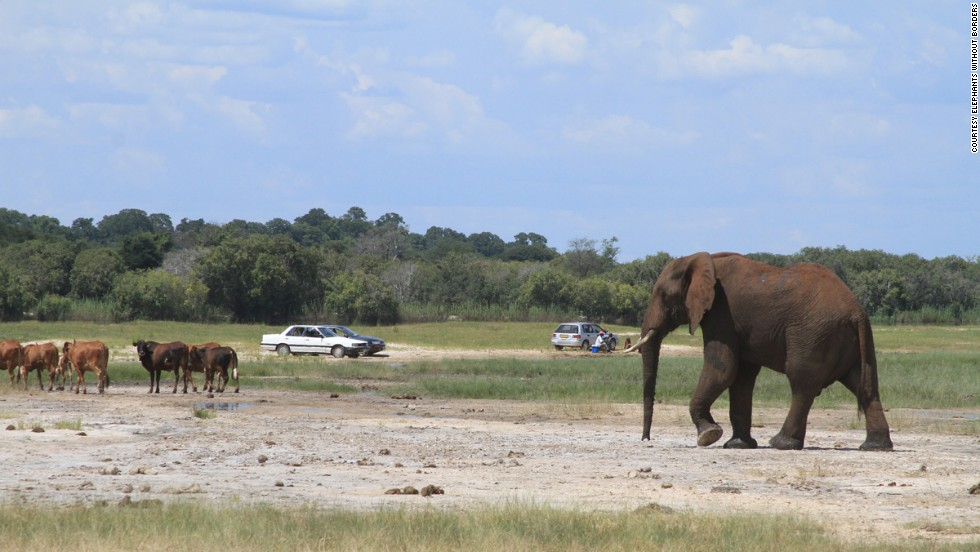 While other countries are facing dwindling populations, Botswana must deal with rising elephant numbers and their impact on local communities and the environment.