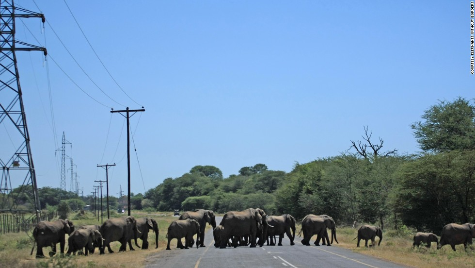 """There are a high number of accidents each year,"" says Tempe Adams, who monitors the movement of animals in Kasane."
