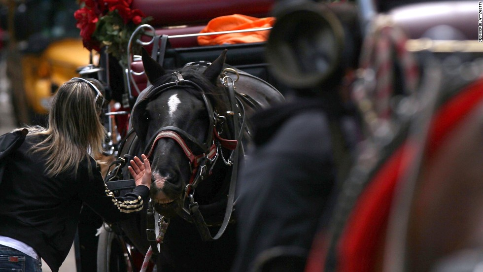 A tourist strokes a horse's nose near Central Park on April 15, 2010. Most of the horses are Percheron mixes. Tourists from all over the world take spins around the park in the carriages.