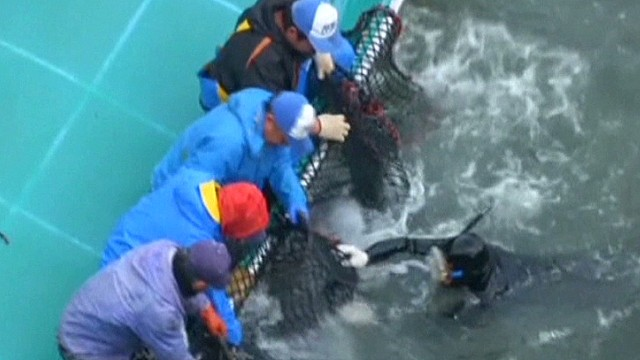 Cameras roll at Japanese dolphin slaughter