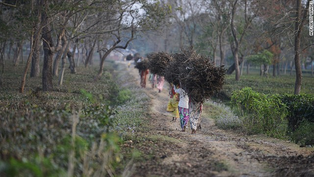 Indian tribal residents collect dry tea bushes to be used for firewood at the Dagapur tea garden on the outskirts of Siliguri in the eastern state of West Bengal on January 23, 2014. Indian police have arrested 13 people after a woman was allegedly gang-raped on orders from tribal village elders who objected to her relationship with a man, an officer said. The attack took place in a remote village in West Bengal state, where the unmarried woman from the Santhal tribal group was suspected of a relationship with a Muslim man from another village. The incident again highlighted India's dismal record on preventing sexual violence, after the fatal gang-rape of a student in New Delhi in December 2012 sparked angry protests about the treatment of women. AFP PHOTO/Diptendu DUTTADIPTENDU DUTTA/AFP/Getty
