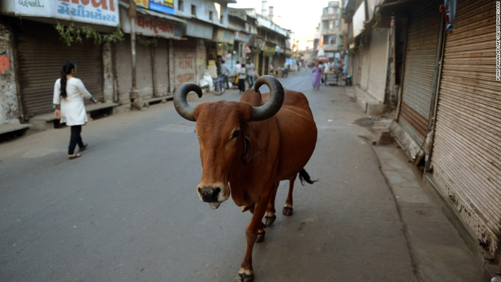 Beef may be popular in the United States -- Americans consume a whopping 11.5 million tons of the meat each year -- but in India, where cows are seen as holy among Hindus, slaughtering this creature is so controversial it has sparked riots. In December 2013, an angry mob burned 74 trucks and buses along the Delhi-Jaipur Highway after hearing rumors that a broken-down truck was loaded with cow meat.