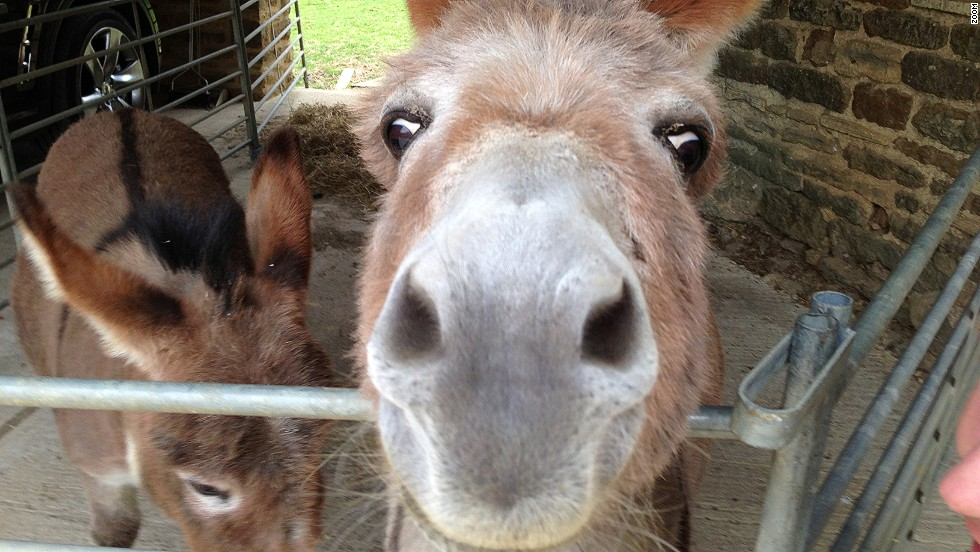 "Stars of Formula One are raising money for Great Ormond Street Hospital Children's Charity by donating personal photographs which will be auctioned in central London Friday. ""This is a photo of my two miniature donkeys,"" explains Red Bull boss Christian Horner. ""Bobby is on the left and it's Betsy close up!"""