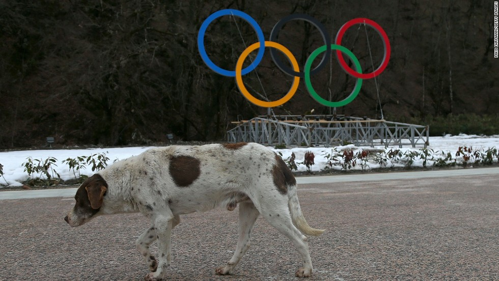 "This dog has the posture of an animal that looks less than impressed by the impending start of the Winter Olympics. <a href=""http://edition.cnn.com/2014/02/05/world/europe/russia-sochi-stray-dogs/index.html?hpt=hp_t2"">In the countdown to the Winter Games, Russian animal rights activists have accused city authorities of ramping up a campaign to exterminate street dogs through the use of poison.</a>"
