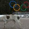 Sochi Olympic village dog