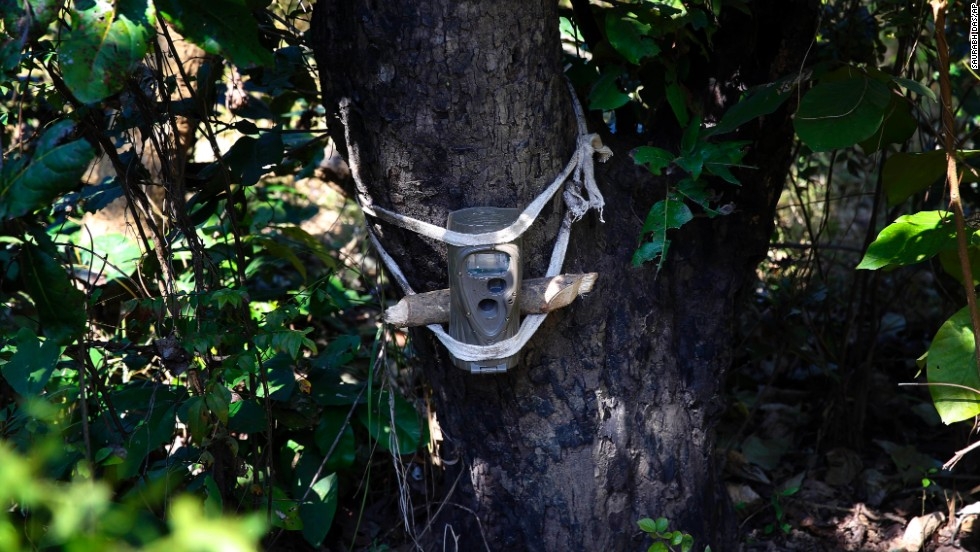 A remote camera is strapped onto a tree in the Sahuwala forest in attempts to capture images of the man-eating tiger. The area is serves as one of India's last wild tiger habitats.