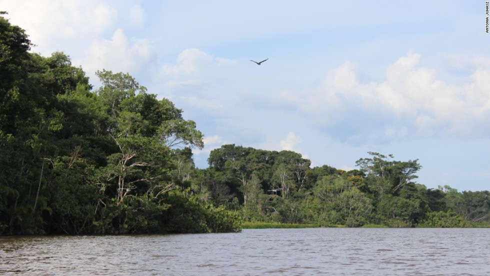 The United Nations declared the Yasuni a World Biosphere Reserve in 1989. Within the park lies the Ishpingo, Tambococha, and Tiputini (ITT) area, home to one of the most intact sections remaining in the Amazon River Basin.