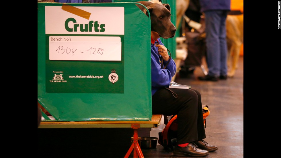 A woman sits with a Great Dane during the first day of the dog show on Thursday, March 6.