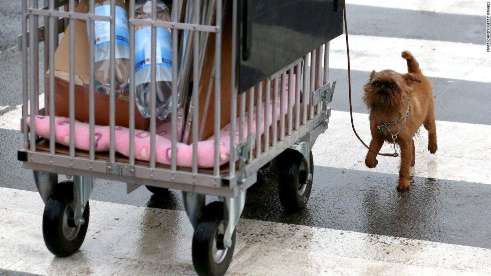 A small dog walks beside a trolley on March 6.