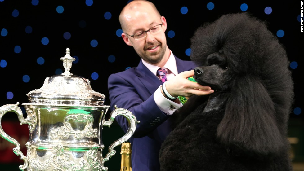 Jason Lynn and Ricky the standard poodle celebrate winning Best in Show at the Crufts dog show on Sunday, March 9. Crufts, held in Birmingham, England, is billed as the world's largest dog show.