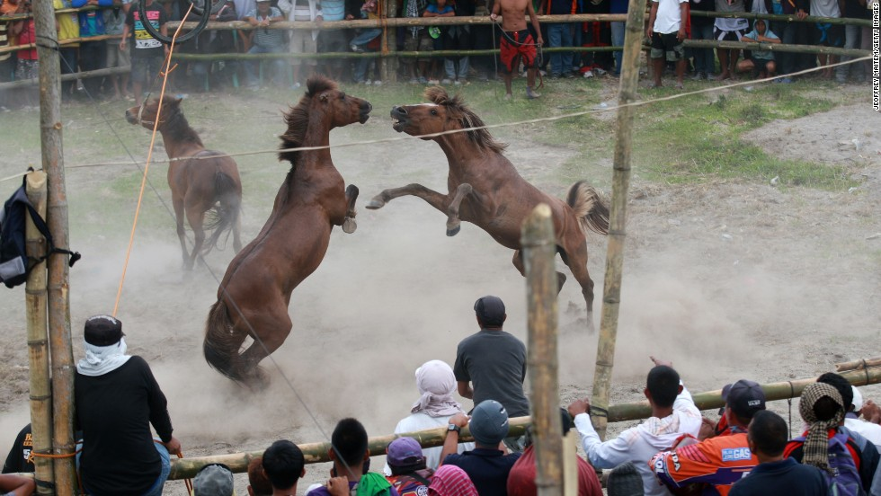 Villagers watch a horse fight during the Seslong festival Monday, March 10, in T'boli, Philippines. Despite a ban against horse fighting in 1998, many communities in the country still celebrate it as a cultural tradition.