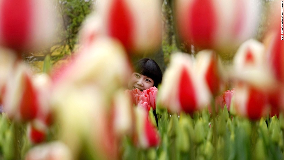 "The fourth-happiest country is the <strong>Netherlands</strong>, where you can enjoy the flowers at the <a href=""http://www.keukenhof.nl/en/"" target=""_blank"">Keukenhof gardens</a> in Lisse. You'll find long fields of tulips throughout the region."