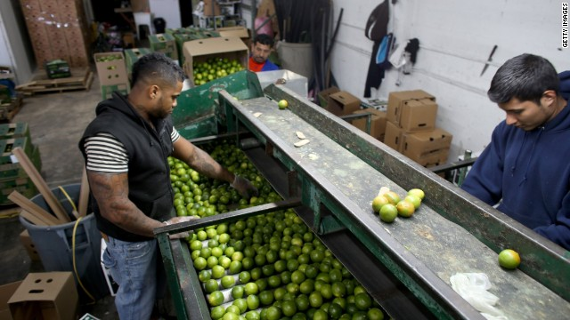 Limes: Mexico's green gold