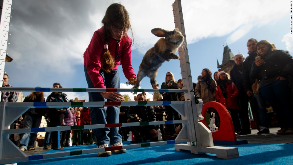 A rabbit jumps over an obstacle during a bunny hop competition that was held Monday, April 14, at an Easter market in Prague, Czech Republic.