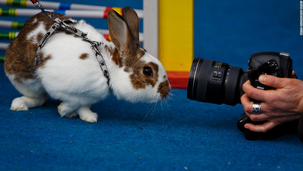 A photographer takes a picture of a curious rabbit during the event.