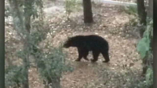 mxp lake mary bear attack 911 call_00000208.jpg