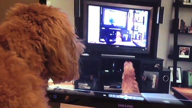 mxp dog barking at itself on tv_00001206.jpg
