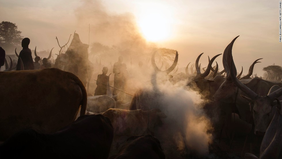 South Sudanese people from the Dinka ethnic group stand among cattle at a cattle camp in Yirol, South Sudan, on Wednesday, February 12.