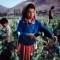 01 steve mccurry afghanistan RESTRICTED
