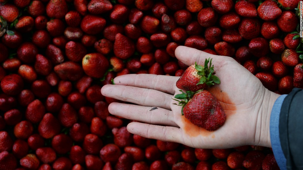 "Every year, the Environmental Working Group publishes its <a href=""http://www.ewg.org/foodnews/dirty_dozen_list.php"" target=""_blank"">Dirty Dozen</a> list, naming the fruits and vegetables that rank highest in pesticide residue. This year, strawberries remained at the top of the list; a single sample of strawberries showed 20 pesticides."