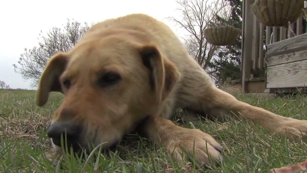 Dog shields missing toddler from rain - CNN Video