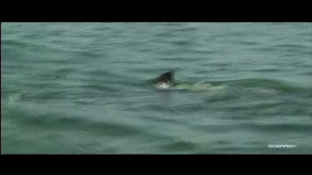dnt fl tracking great white sharks_00000005.jpg