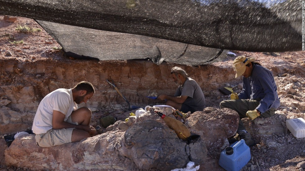 Technicians work to unearth the fossils.