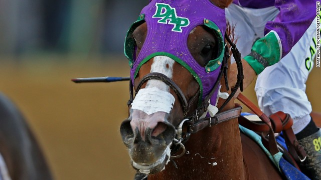 California Chrome will race at Belmont
