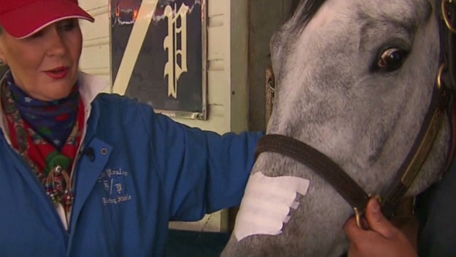 Do nasal strips for horses really work?