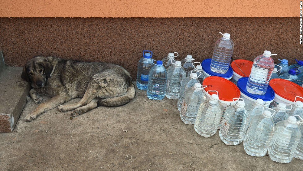 A rescued dog rests in an animal shelter in Drazevac, Serbia, on May 21.