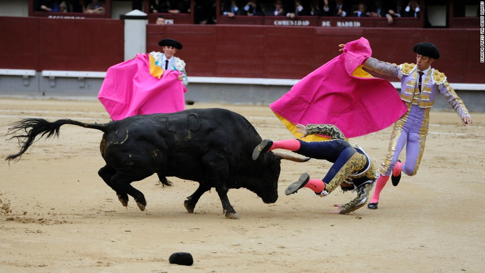 Matador David Mora is knocked down by a bull at Las Ventas bullring in Madrid on Tuesday, May 20.