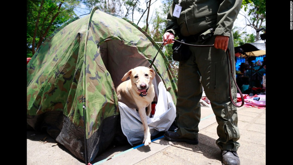 A police dog searches a tent at the pro-government demonstration site outside Bangkok on May 23.