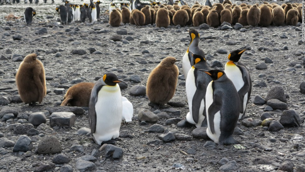 Penguins on Possession Island in the Crozet archipelago, part of the French Southern and Antarctic Lands.