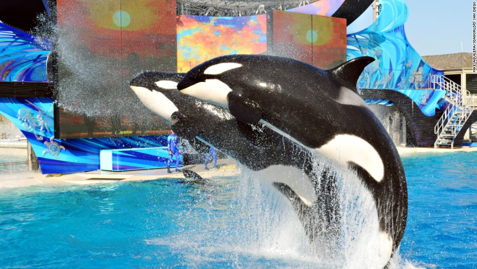 SeaWorld can expand pool -- if it stops breeding orcas
