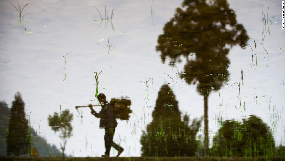 A farmer is reflected in water as he walks along terraced fields in China's Zhejiang province on Tuesday, May 27.