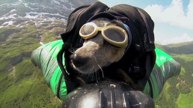 Does this dog like BASE jumping?