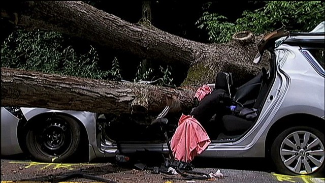 dnt tree falls on car georgia_00000728.jpg
