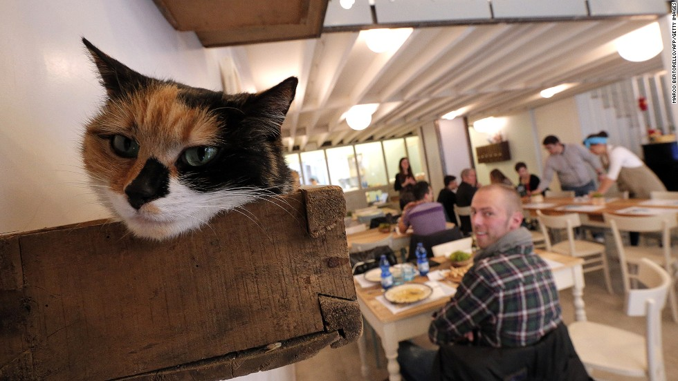 Some claim cat cafes have questionable hygiene standards. But as one cafe owner points out, they are subject to strict regulations and wouldn't be granted a license unless they complied. This cafe in Turin looks squeaky clean.