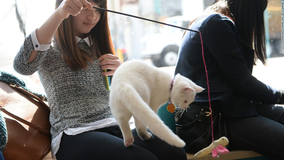 New York's pop-up cat cafe was tested in April 2014. For four days visitors could have a coffee and interact with 21 cats and even adopt one if they wanted.