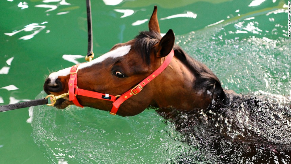Racehorses use other methods to keep fit and recover, including the equine pool, which is much larger than a treadmill and demands that the horse swims, with no legs touching the floor.