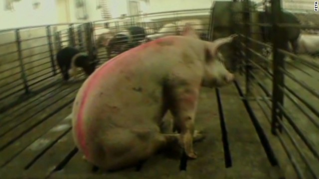 erin dnt frates animal abuse videos illegal_00044918.jpg