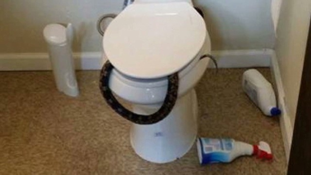 dnt officer removes found snake on toilet _00000104.jpg
