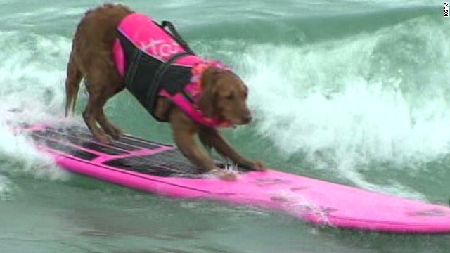 mxp dog surfing contest KGTV _00004926.jpg