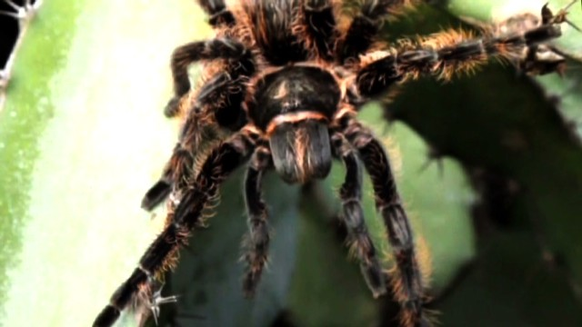 How would you like to spot one of these crawling around during your flight? Delta put passengers on another plane after finding a tarantula in the cargo hold of an aircraft before takeoff.